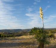 De Achtergrond van het de Woestijnlandschap van Arizona stock afbeelding