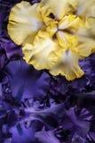 De achtergrond van de irisbloem stock fotografie