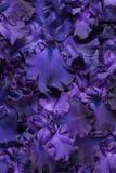 De achtergrond van de irisbloem royalty-vrije stock foto's