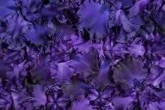 De achtergrond van de irisbloem stock foto's