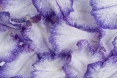 De achtergrond van irisbloemblaadjes royalty-vrije stock fotografie