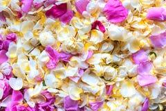 De achtergrond van jasmijn en nam toe Royalty-vrije Stock Fotografie