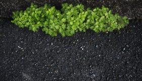 De achtergrond van jonge boom groeit op de weg Royalty-vrije Stock Afbeelding