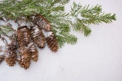 De achtergrond van Kerstmis Bos van kegels en nette takken op Sn Royalty-vrije Stock Foto
