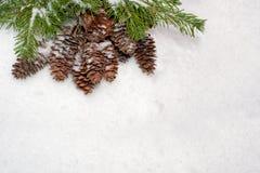 De achtergrond van Kerstmis Nette die takken en kegels, op bovenkant worden gevestigd Royalty-vrije Stock Foto