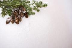 De achtergrond van Kerstmis Nette takken en kegels op sneeuw  Royalty-vrije Stock Fotografie
