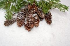 De achtergrond van Kerstmis Nette takken en kegels op sneeuw Stock Fotografie