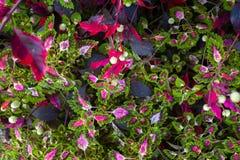 De achtergrond van kleurenbladeren Royalty-vrije Stock Foto