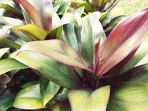 De achtergrond van kleurenbladeren Beeld in uitstekende toon Royalty-vrije Stock Foto's