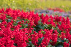 De achtergrond van de kleurrijke bloemen, Kleurrijke bloemen Royalty-vrije Stock Foto's