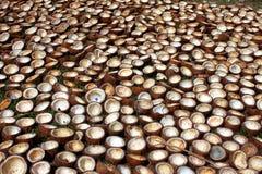 De Achtergrond van kokosnoten Stock Foto