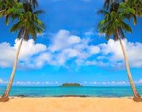 De achtergrond van kokospalmen Stock Afbeelding