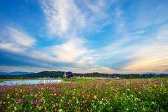 De achtergrond van de landschapsaard van het mooie gebied van de kosmosbloem  stock foto