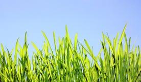 De achtergrond van de de lenteaard, de zomergazon in zonlicht Stock Foto