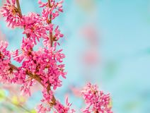 De achtergrond van de de lentebloesem Tot bloei komende boom over aard backgroun Stock Foto's