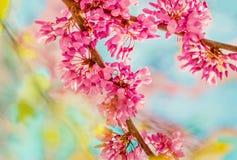 De achtergrond van de de lentebloesem Tot bloei komende boom over aard backgroun Royalty-vrije Stock Afbeeldingen
