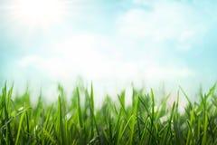 De achtergrond van de de lenteweide Royalty-vrije Stock Afbeeldingen