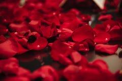 De achtergrond van mooie rood nam bloemblaadjes in dark toe Royalty-vrije Stock Afbeeldingen