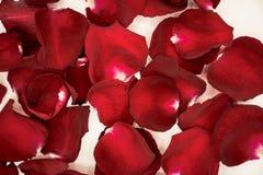 De achtergrond van mooie rood nam bloemblaadjes toe Stock Foto's