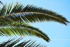 De achtergrond van de palmbladen groene installatie, tropische textuur Royalty-vrije Stock Foto's