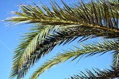 De achtergrond van de palmbladeninstallatie, tropische textuur Royalty-vrije Stock Afbeeldingen