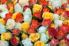 De achtergrond van rozen Royalty-vrije Stock Foto's