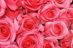 De Achtergrond van rozen Royalty-vrije Stock Afbeelding