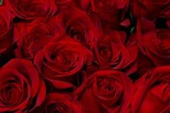 De achtergrond van rozen Stock Foto's