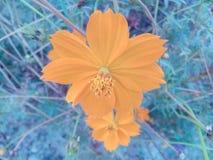 De achtergrond van de de schoonheidsverlichting van de bloemaard Royalty-vrije Stock Afbeelding