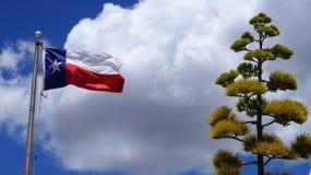 De Achtergrond van Texas Flag en van de Agave stock afbeeldingen