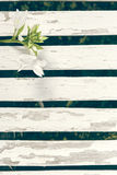 De Achtergrond van tuinlily over white wooden fence Stock Foto