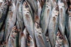 De achtergrond van vissen stock afbeelding