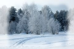 De achtergrond van de winter De achtergrond van Kerstmis of van het Nieuwjaar De winter voor Stock Afbeeldingen