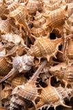 De achtergrond van de zeeschelpeninzameling Stock Foto