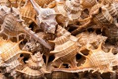 De achtergrond van de zeeschelpeninzameling Stock Foto's