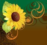 De achtergrond van zonnebloemen Stock Afbeelding