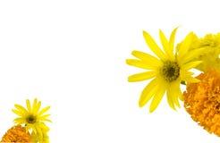 De achtergrond van zonnebloemen en van goudsbloemen Stock Foto
