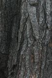 De achtergrond, zwarte, raad, brandwond, brandde, houtskool, steenkool, kleur, barst, dark, brand, brandhout, grunge, hitte, hori royalty-vrije stock foto