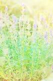 De achtergronden van Bluredbloemen Royalty-vrije Stock Afbeeldingen