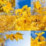 De achtergronden van de de herfstaard Stock Foto