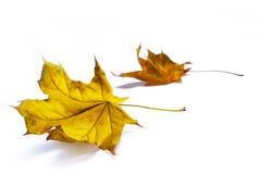 De achtergronden van de herfst Royalty-vrije Stock Foto