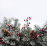 De achtergronden van de kerstboom Stock Afbeelding