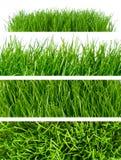 De achtergronden van het gras Stock Afbeeldingen