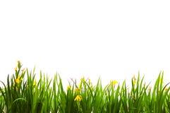 De achtergronden van het gras Royalty-vrije Stock Afbeelding