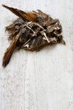De achtergronden van het vogelsskelet Stock Afbeelding