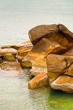De achtergrondreeks van stenen grote gekronkelde corrosie behandelde droge witte shells op de achtergrond van het overzees stock fotografie
