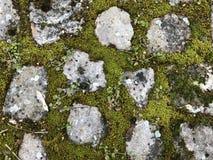 De achtergrondstructuur is een combinatie steen en mos-01 stock foto's