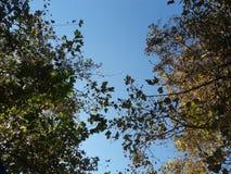 De achtergrondtextuur van bomen en doorbladert Stock Foto's