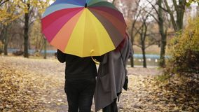 De achtermening van jongelui koppelt het lopen samen in de herfstpark die een kleurrijke paraplu houden en het verdraaien stock videobeelden