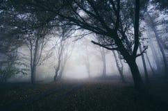 De achtervolgde bosachtergrond van Halloween met angstaanjagende bomen stock fotografie